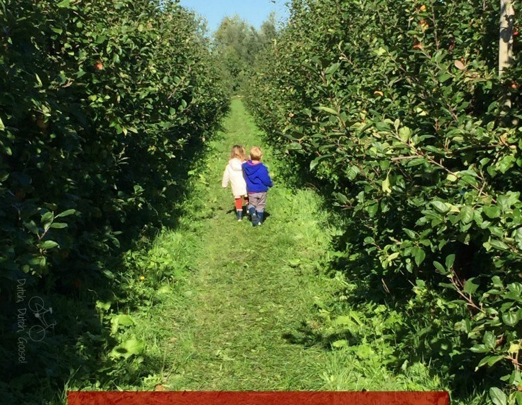 A Day Picking Apples in the Netherlands