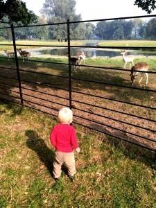 Deer Park Kasteel De Haar