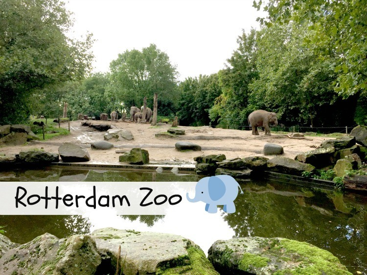 A visit to the Rotterdam Zoo.