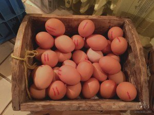 Fresh Eggs from Hoove Biesland