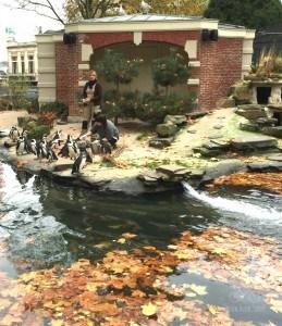 Penguins at Antwerp Zoo