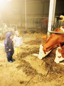 Visiting with the Cows at Hoove Biesland