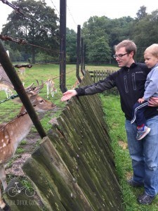 Delft Deer Park Feeding