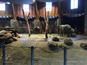 Elephant House Wuppertal Zoo
