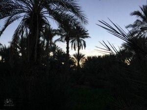 Palm Grove Zagora
