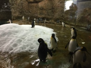 Penguins at Wuppertal Zoo