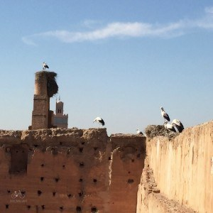 Storks El Badi Palace