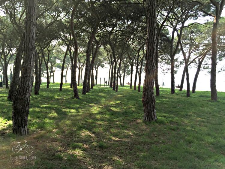 Venice Parks View