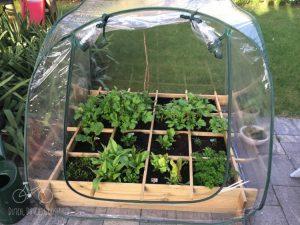 AH Garden Growing