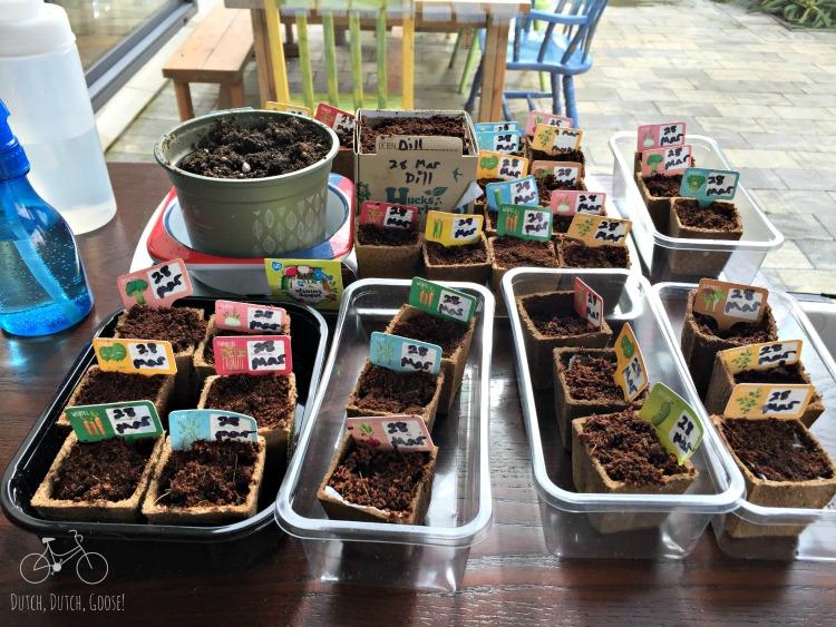 AH Seedlings