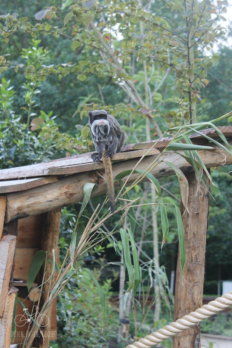 Vogelpark Tamerind