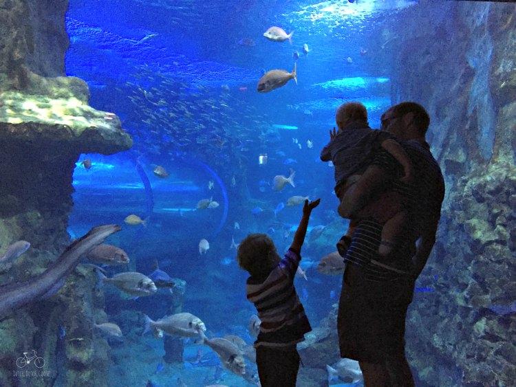San Sebastian Large Aquarium Tank