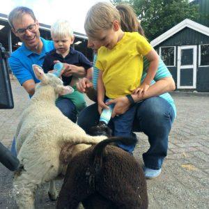 HHI Lamb Feeding