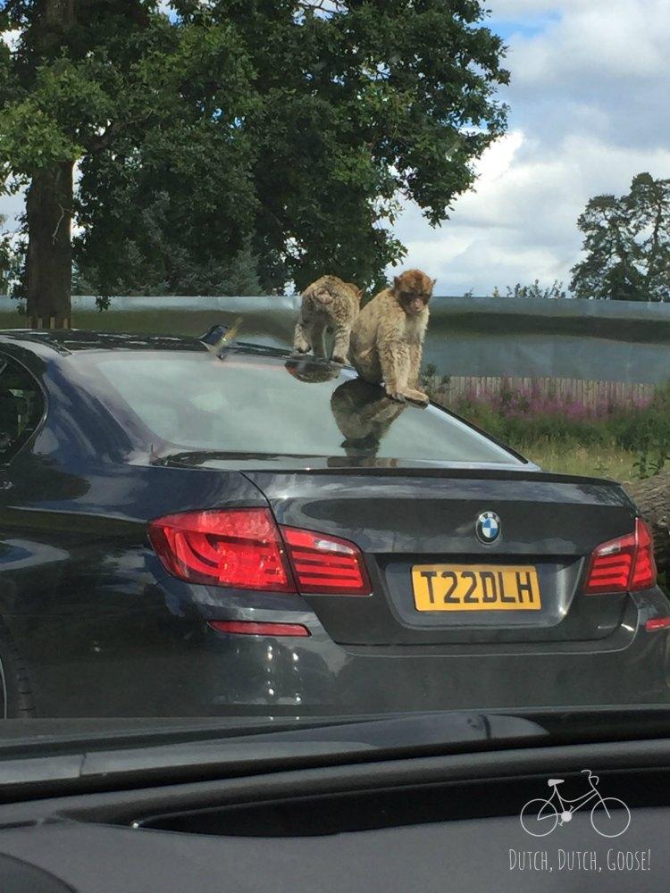 Monkeys on a car at Brad Drummond Adventure Park
