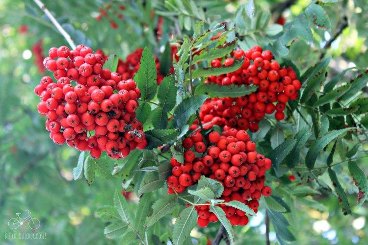 Red Berries Archeon